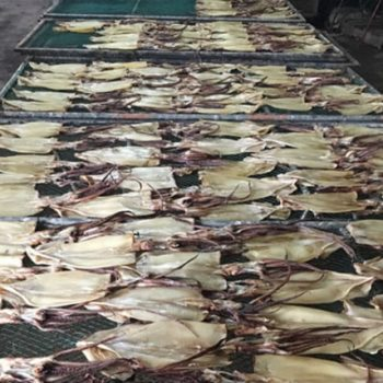 Top Grade frozen illex Squid dried on sale 4-3